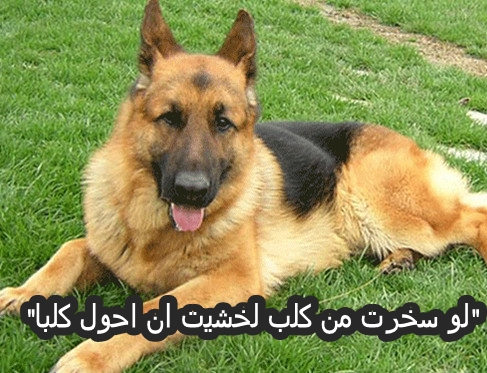 صور عليها حكم عن الكلاب , امثال عن الكلاب , عبارات عن الكلب