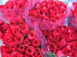 3caa4048c عبارات عن الورد الاحمر , كلام يكتب عن الورد الاحمر