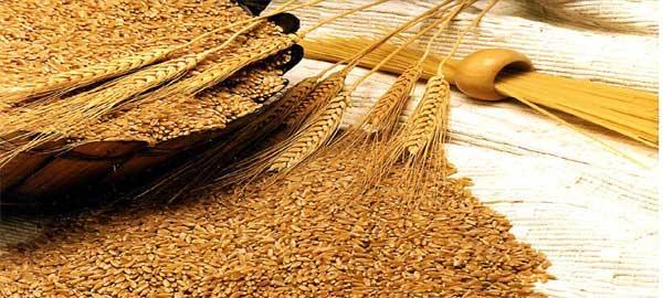 اهميته للجسم ، القمح وفائدته