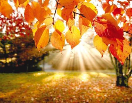 نصائح لتعزيز المناعة في الخريف