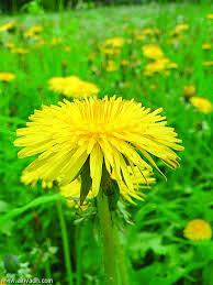 علاج مشاكل الهضم ، نباتات تساعد على الهضم