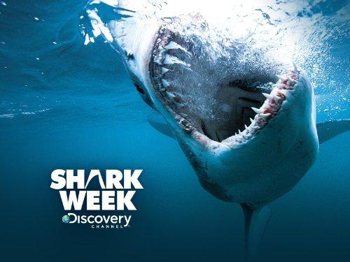 تردد قناة Discovery Shark على قمر هوت بيرد لعام 2016