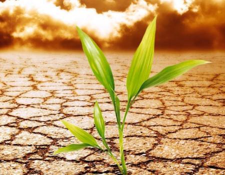 تغير المناخ يعيد فورة الجراد والأمل بالتربة للحد منه