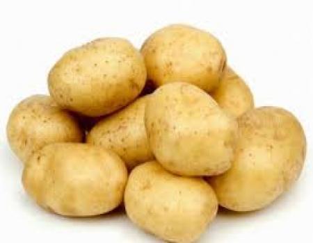وزارة الزراعة ارتفاع اسعار البطاطا سيؤدي الى تسعيرها