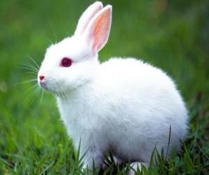 تفسير الأرنب في المنام ميلر , رؤيا الأرنب في الحلم لميلر