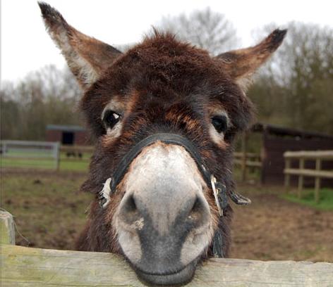 صور الحمار ، صور حمير مضحكة ، خلفيات الحمير ، Donkey Pictures 2018