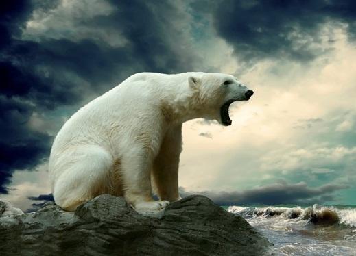 معلومات عن الدب القطبي الثلجي , صور صغار الدب القطبي الشمالي
