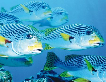 هل السمك يتألم مثل البشر