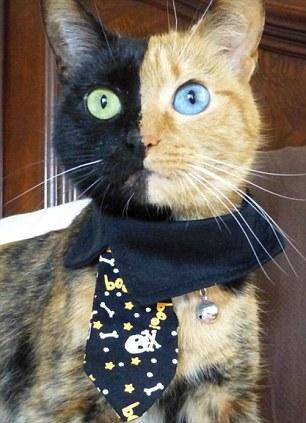 شاهد صور قطة ذات وجهين تتحول إلى نجمة على مواقع التواصل