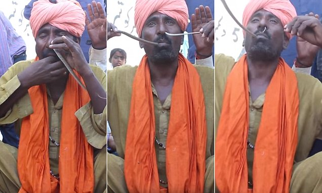 عجائب وغرائب صور باكستاني يدخل أفعى من أنفه ويخرجها من فمه