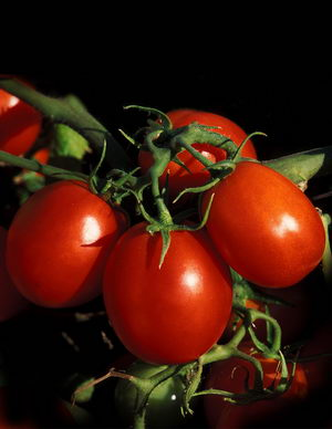 العلاج بالطماطم ، اهمية وفوائد البندورة الدوائية