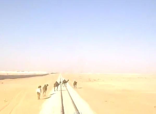 فيديو يوتيوب قطار يصطدم بمجموعة جمال في الصحراء