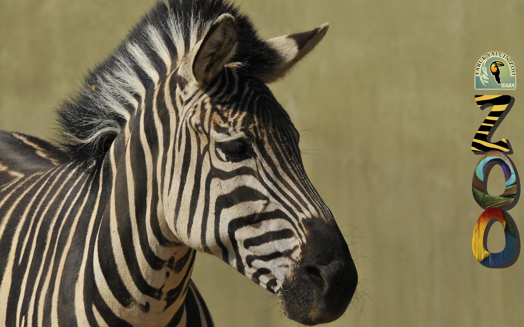 افضل حديقة حيوان في العالم , حديقة الحيوان في اسطنبول