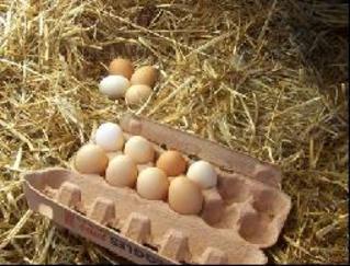 تناول البيض بانتظام يقلل الاصابة بسرطان الثدي