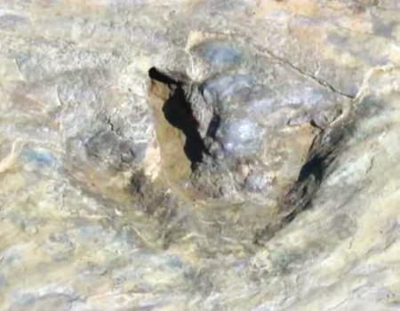 عالم متحجرات ألماني يكتشف آثار أقدام ديناصورات