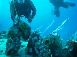 بالصور استخراج 20 طن نفايات من أعماق البحر بالعقبة من خلال فريق الغطاسين