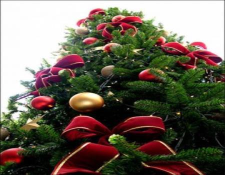 الاحتفال باضاءة اطول شجرة ميلاد 26 مترا في اربد