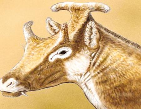 كائن عاش قبل 15 مليون سنة يشبه الزرافة ثلاثة قرون فوق رأسه