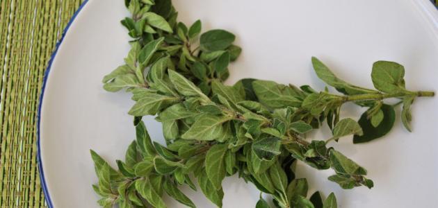 نبات الأوريجانو طارد للحشرات لأنه نبات ذات رائحة نفاذة